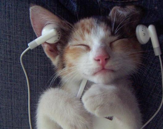 musica-per-gatti